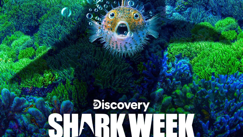shark week 2020 - photo #22